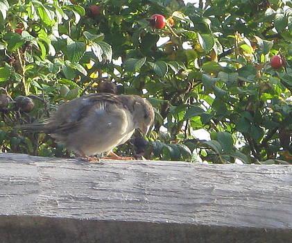 Bird I by Valentine Estabrook