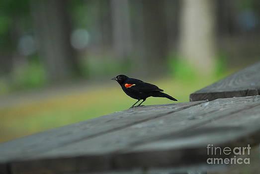 Bird in Park by Curtis Brackett