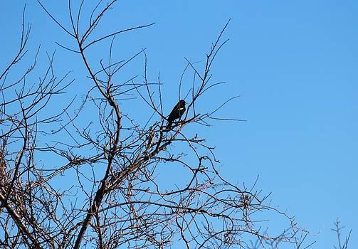 Bird in Tree by Rita Tortorelli
