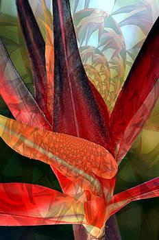 Bird of Color... by Tanya Tanski