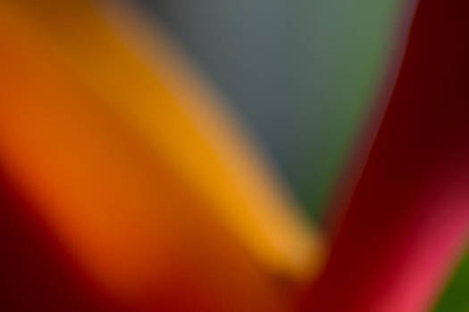 Roger Mullenhour - Bird of Paradise Abstract
