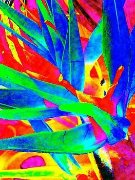 Bird of Paradise1 by Linnea Tober