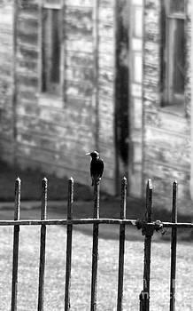 Bird on a Fence by Bernadette Kazmarski