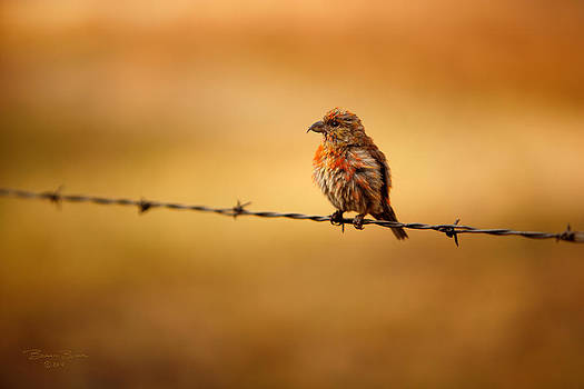 Bird on a Wire by Brian Brown