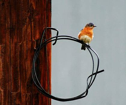 Bird on a wire by Carrie OBrien Sibley