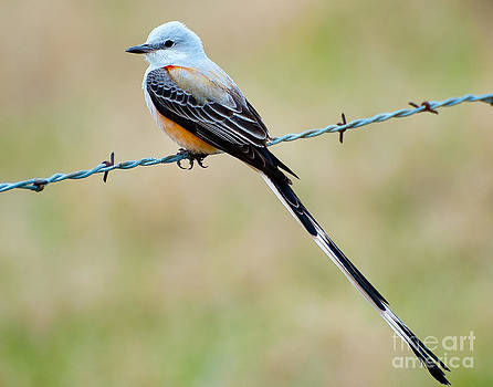 Bird on a Wire by Rob Morgan
