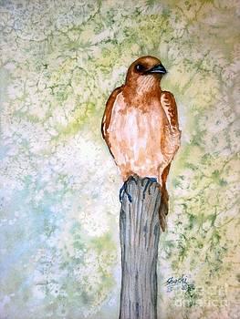 Bird by Shashikanta Parida