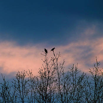 Bird Silouette by Stacy Root