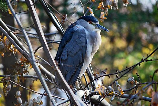 Michelle Cruz - Bird Watching