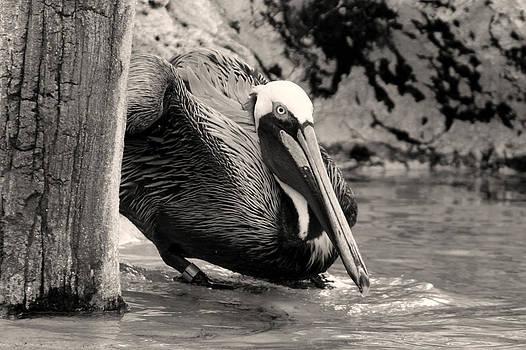 Bird1 by Shweta Singh