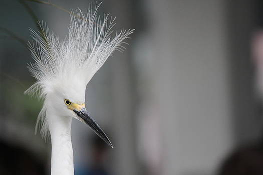 Bird2 by Shweta Singh