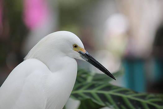 Bird3 by Shweta Singh