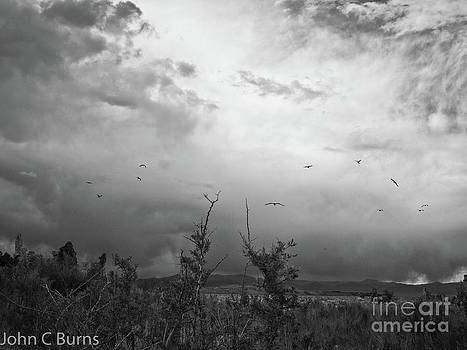 Birds at Mono Lake by John Burns
