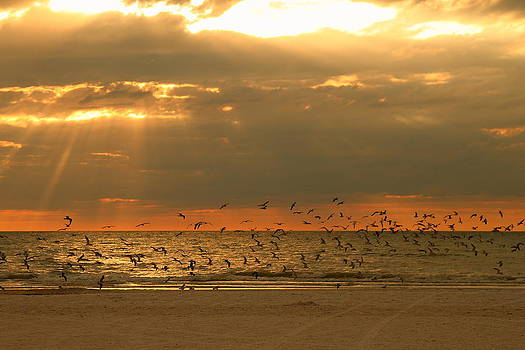 Birds at sunset by Luis Marquez