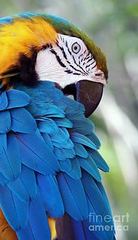 Bird's Eye View by Glennis Siverson