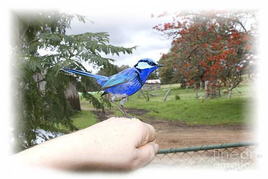 Wendy Slee - Bird