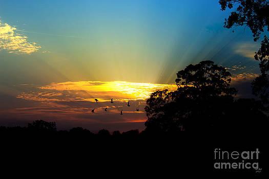 Ms Judi - Birds Flying Sunset