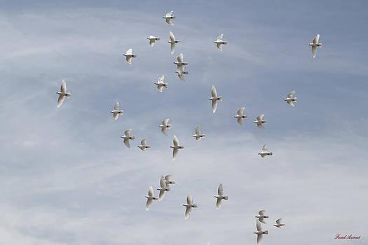 Birds by Fuad Azmat