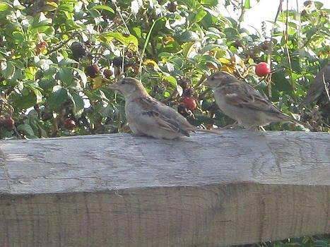 Birds II by Valentine Estabrook