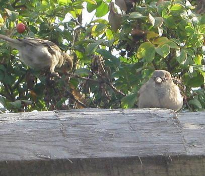 Birds III by Valentine Estabrook