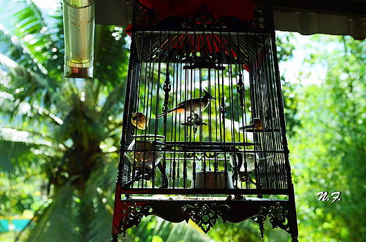 Birds in cage by Nataly Fomina