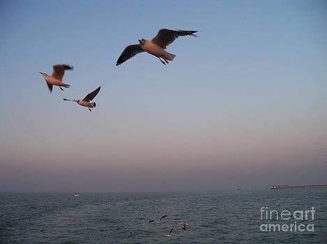 Birds in flight by Hemangi Koticha