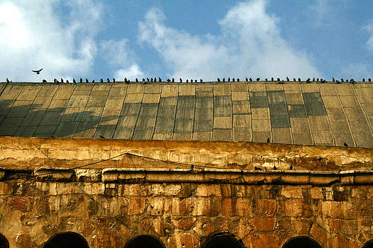 Birds line up  by Ziyad Mihyar