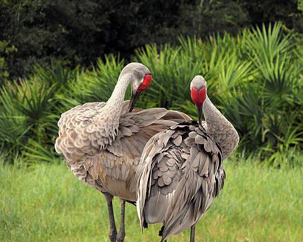 Peg Urban - Birds of a Feather