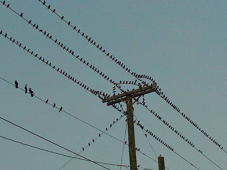 Birds On A Wire by Lisa Pedro