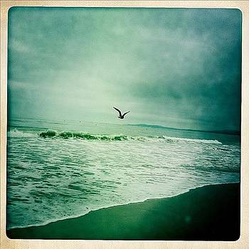 #birds #seabirds #beach #coastline #sea by Todd Kelley