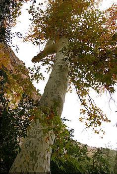 Birdtop Tree by Nabila Khanam