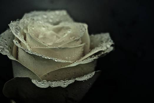 Birthday Rose by Grebo Gray