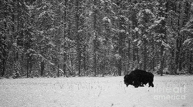 Bison In Snow Mosaic by Barry Shaffer