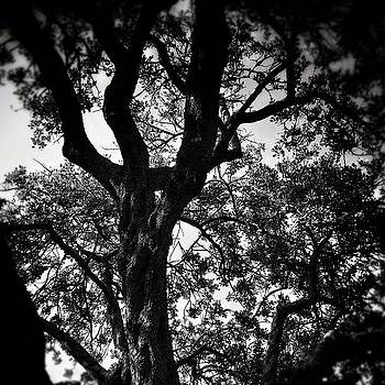 Black & White Trees...#nature #trees by Loghan Call
