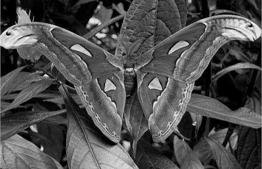 Black and White Butterfly by Victoria Mack