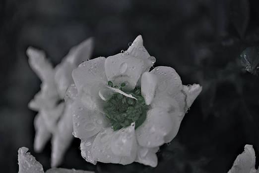 Michelle Cruz - Black and White