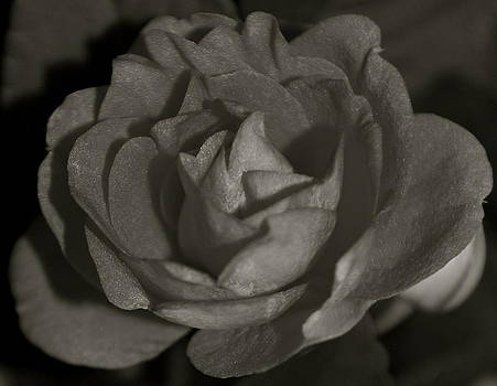 Michelle Cruz - Black and White Rose