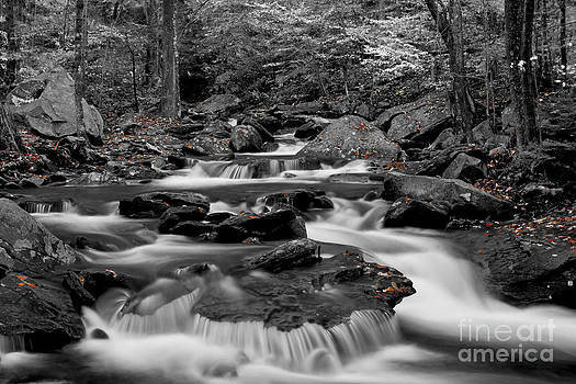 Black and White stream at Ricketts Glen by Robert Wirth