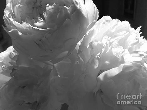 Black and White Study 2 by Caroline Ferrante