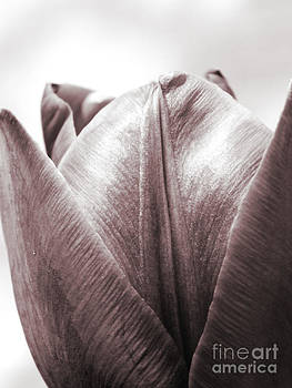 Emily Kelley - Black and White Tulip