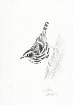 Black and white warbler by Wenfei Tong