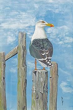 Black-Backed Gull by Marsha Friedman