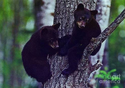 Diane Kurtz - Black Bear Cubs