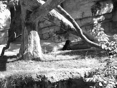 Black Bear by Michaelle Beasley