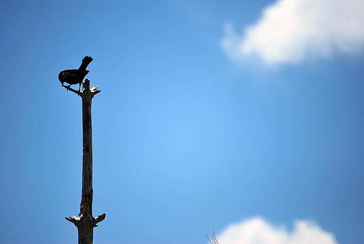 Amee Cave - Black Bird