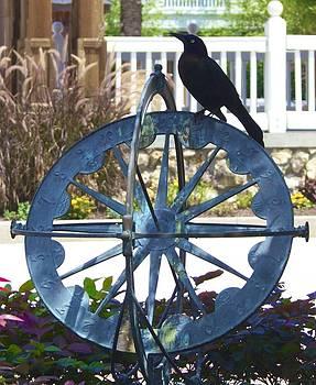 Jennifer Lamanca Kaufman - Black Bird