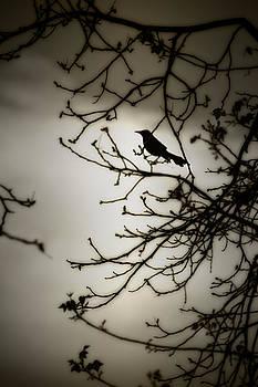 Black Bird by Kim Zier