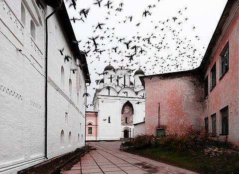 Black birds by Konstantin Gushcha