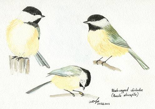 Black-capped chickadees by Wenfei Tong