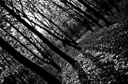 Black Forest by Presiyan Petrov
